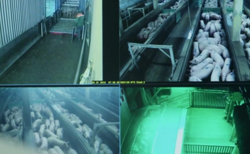 Videoüberwachung für mehr Tierschutz – Willkommen im Club!