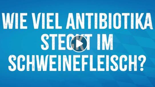 Nachgeha(r)kt: Wie viel Antibiotika steckt im Schweine- fleisch?