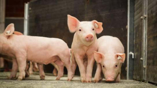 Bundeskabinett stimmt Isofluran-Anwendung durch Tierhalter zu