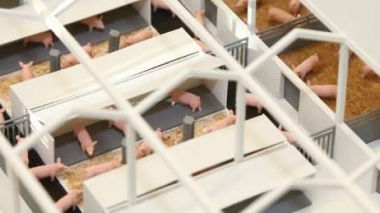 NRW will die Nutztierhaltung der Zukunft nachhaltiger gestalten