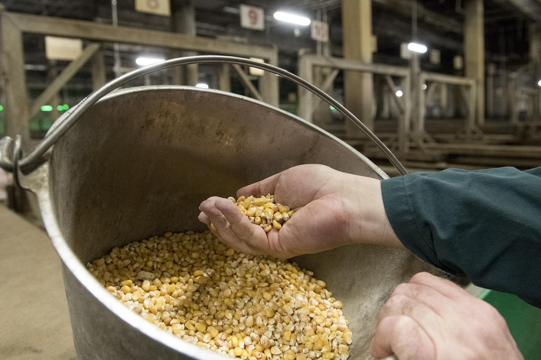 Antibiotikaverbrauch in der Tierhaltung weiterhin auf niedrigem Niveau