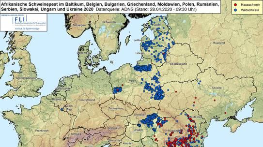 Neue ASP-Fälle an der polnischen Grenze zu Brandenburg