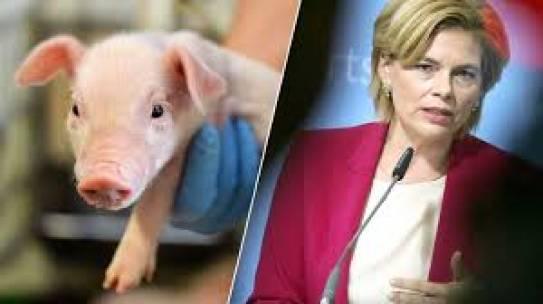Agrarministerin Klöckner fordert Unterstützung von Arbeitsminister Heil
