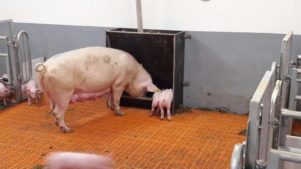 Corona-Überbrückungshilfe III für landwirtschaftliche Tierhalter angepasst