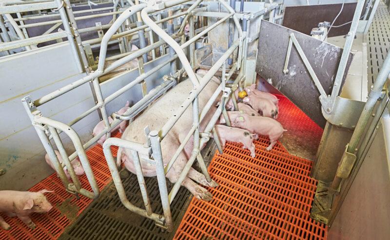 Umstellungen durch die neue Tierschutz-Nutzierhaltungs- verordnung